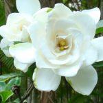 Flora - Pesque Pague Chácara Jacaré